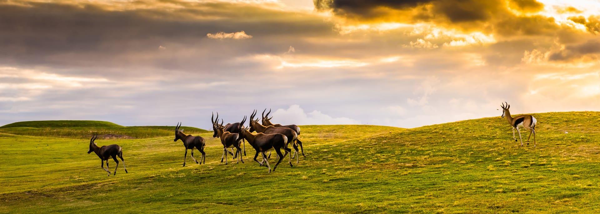 National Park, Südafrika
