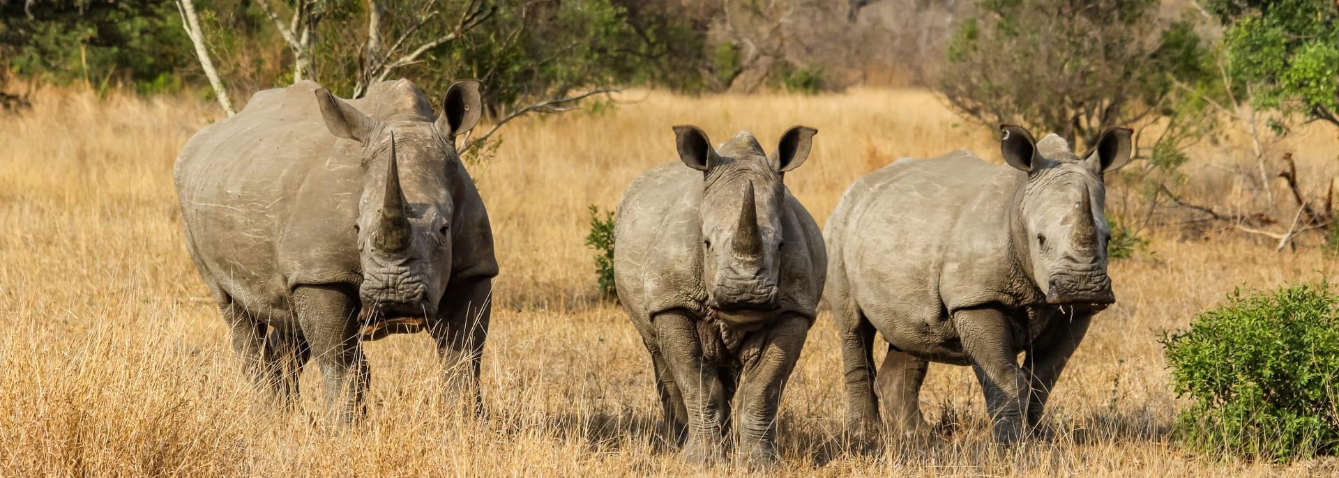 Krueger Nationalpark, Südafrika