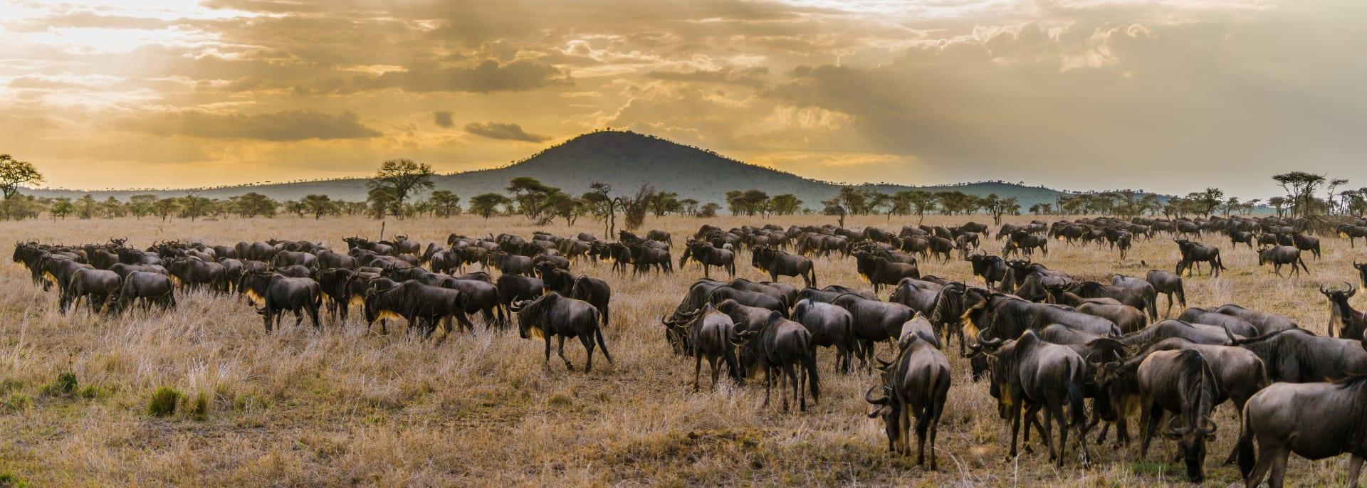 Serengeti, Tansania/Sansibar