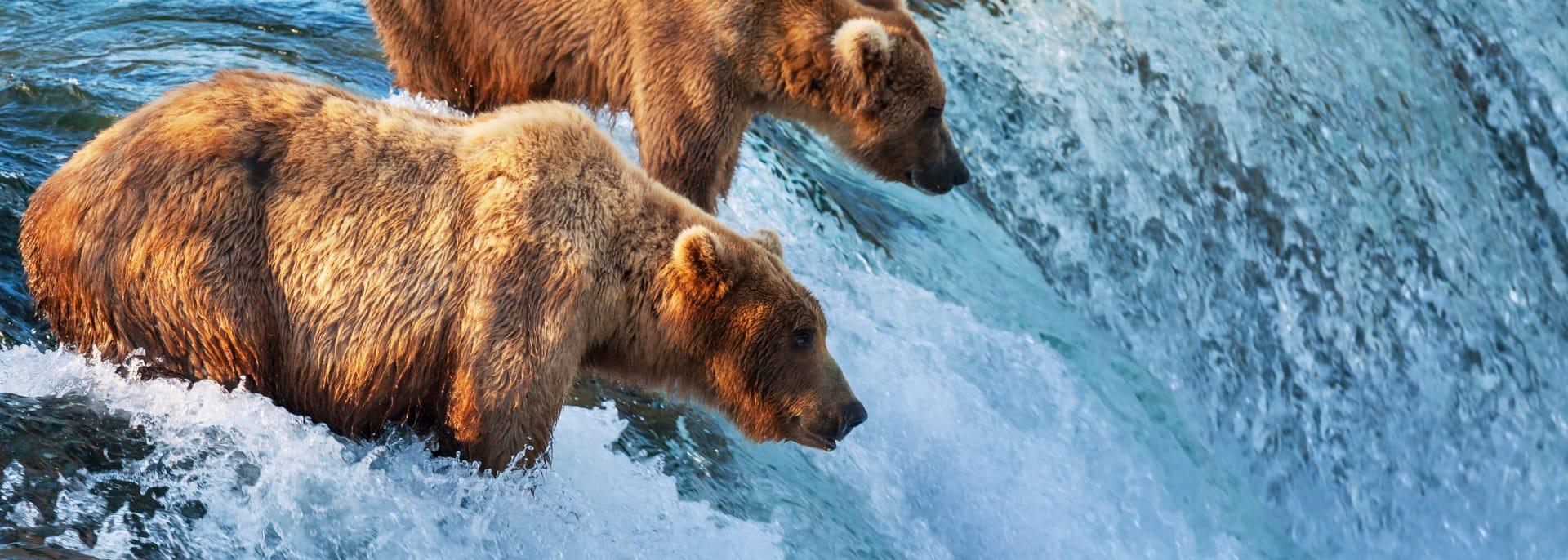 Wildlife, Alaska