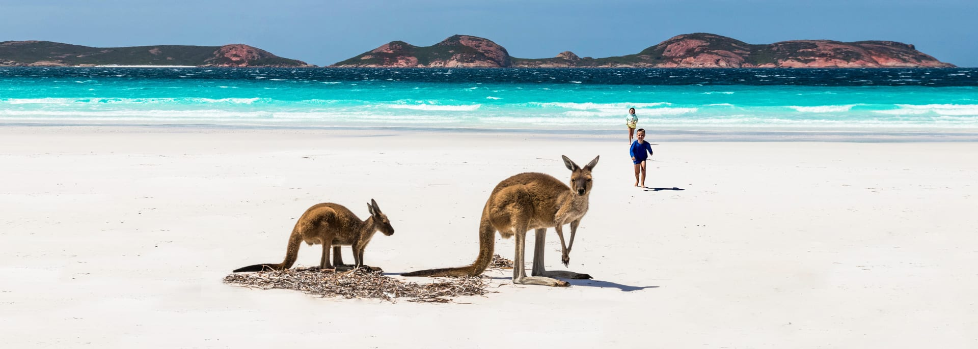 Kangaroos , Australien