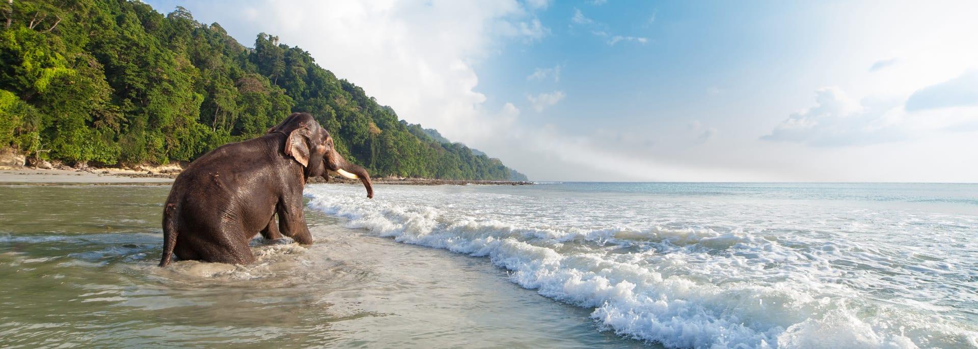 Havelock Insel, Indien