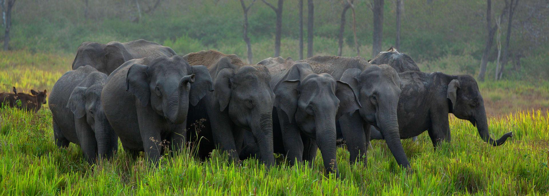 Corbett Nationalpark, Indien