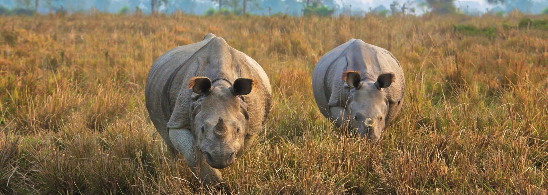 Kaziranga Nationalpark, Indien