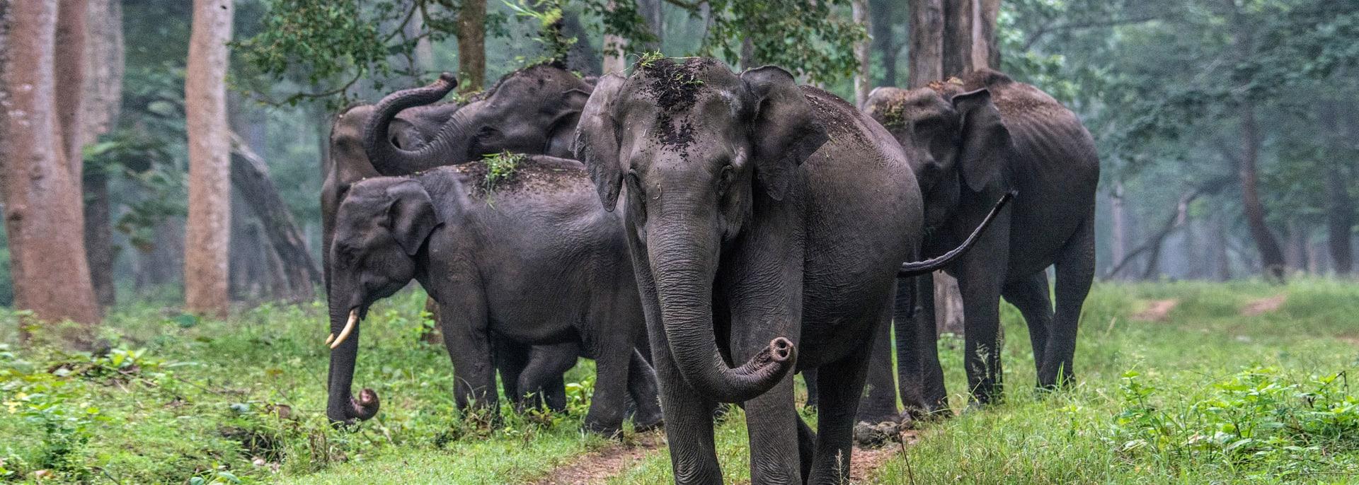 Nagarhole Nationalpark, Indien