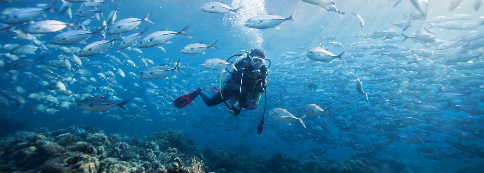 Scuba, Seychellen