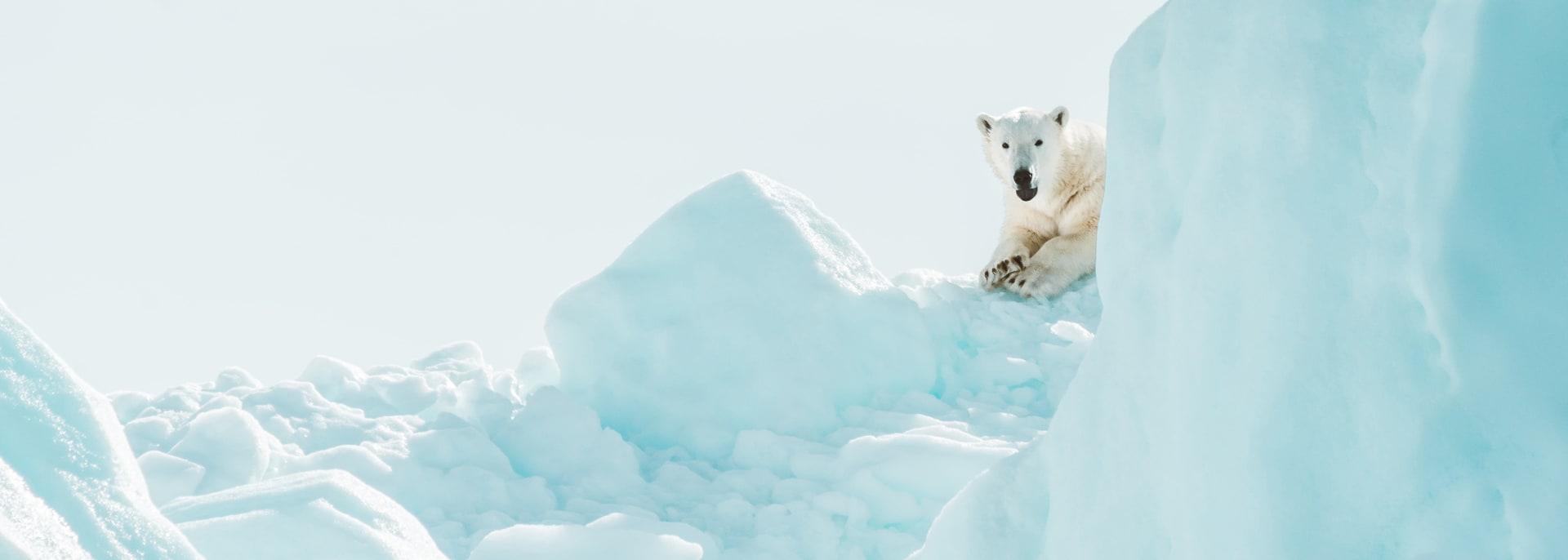 Arktis Sommer