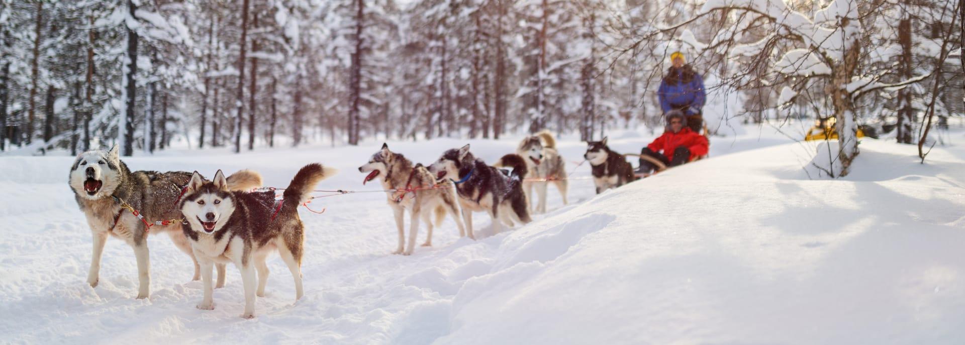 Hundeschlitten Reisen, Lappland