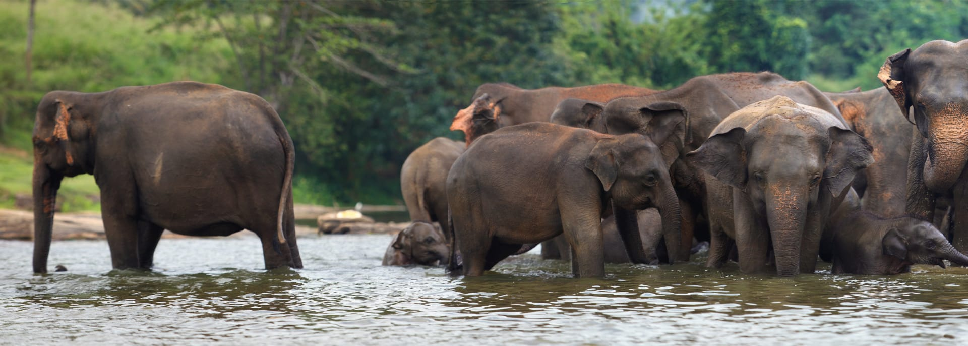 Udawalawe Nationalpark, Sri Lanka