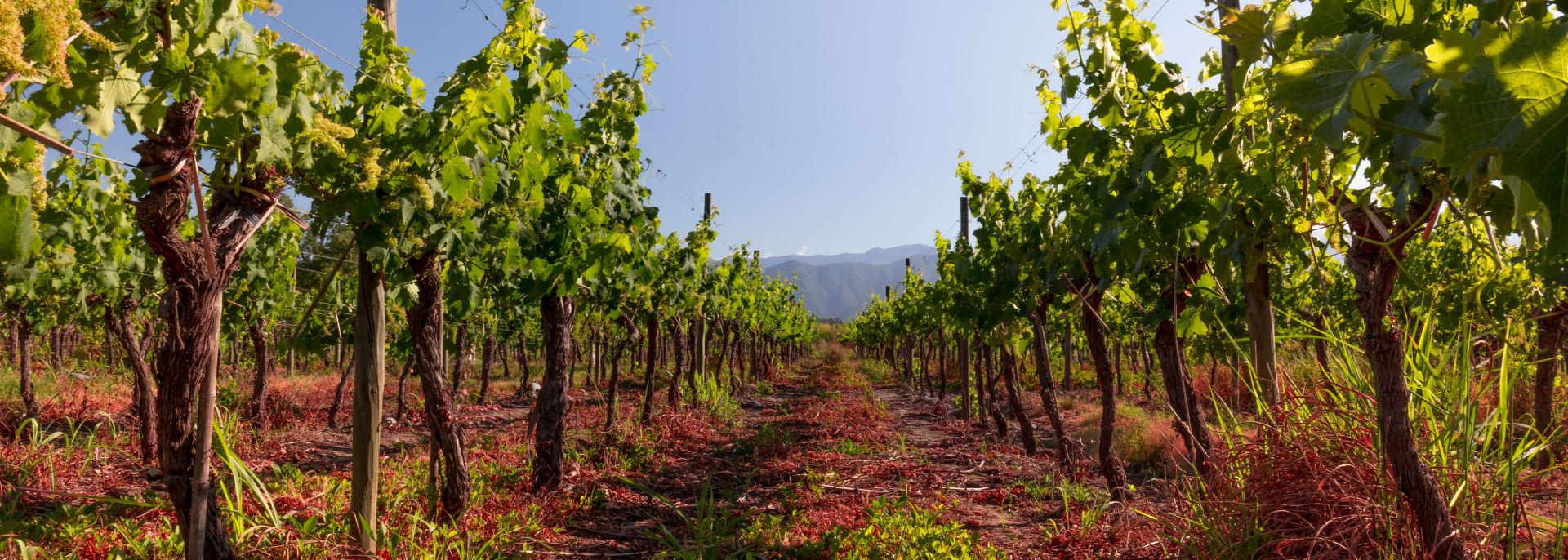 Chilenisches Weingut, Chile