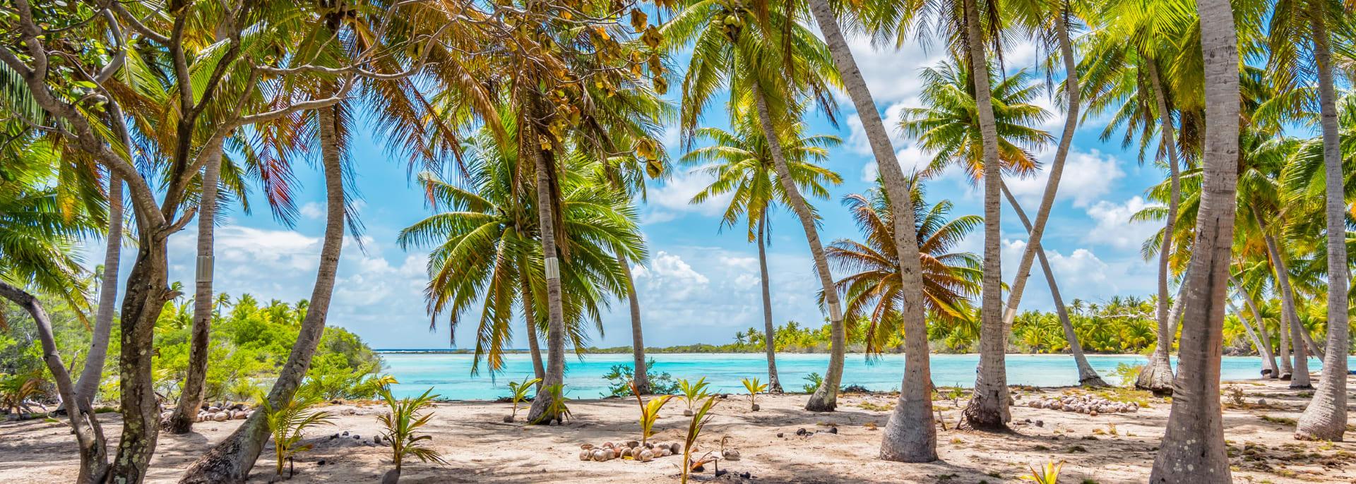 Palmen am Strand von Fakarava, Französisch Polynesien