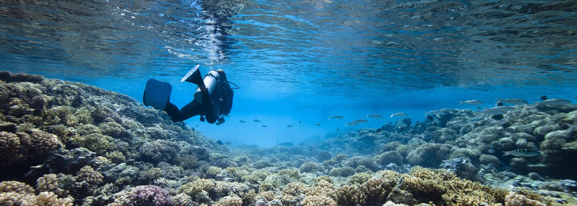 Tauchen, Französisch Polynesien