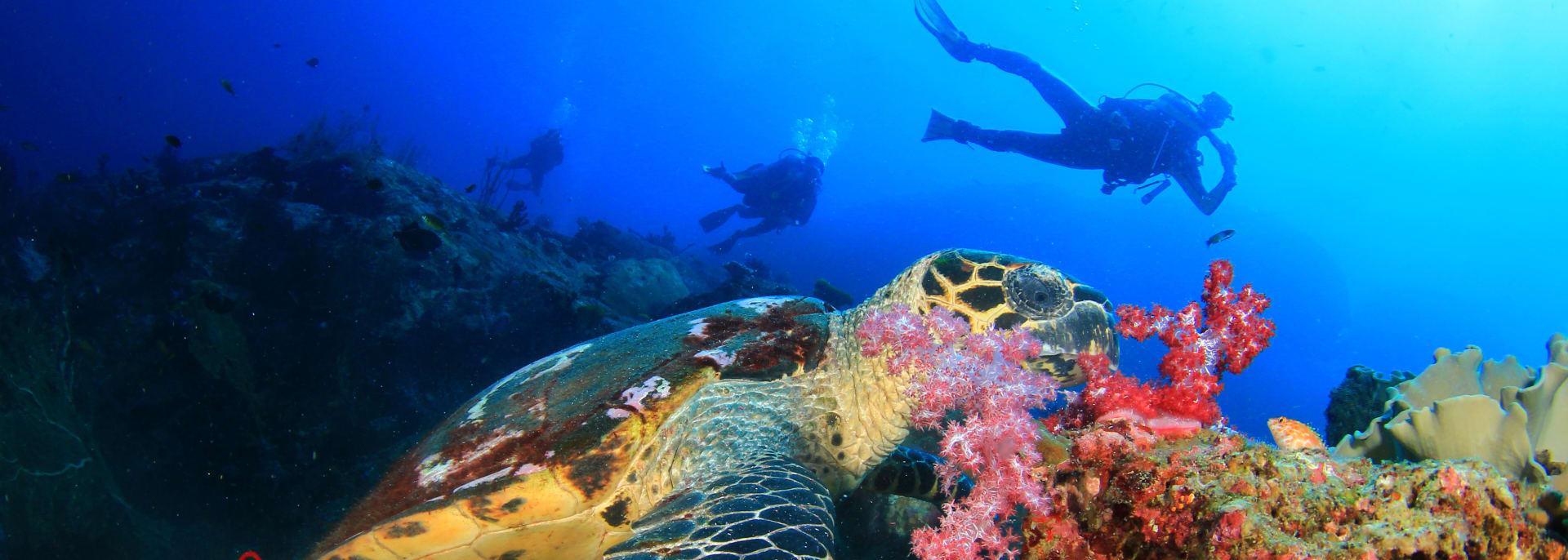 Unterwasserwelt mit Taucher