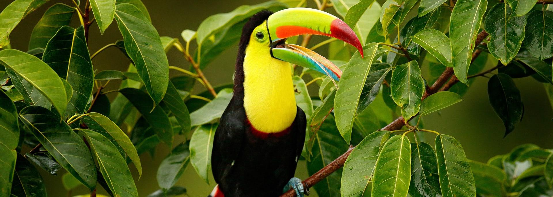 Sarapiqui, Costa Rica