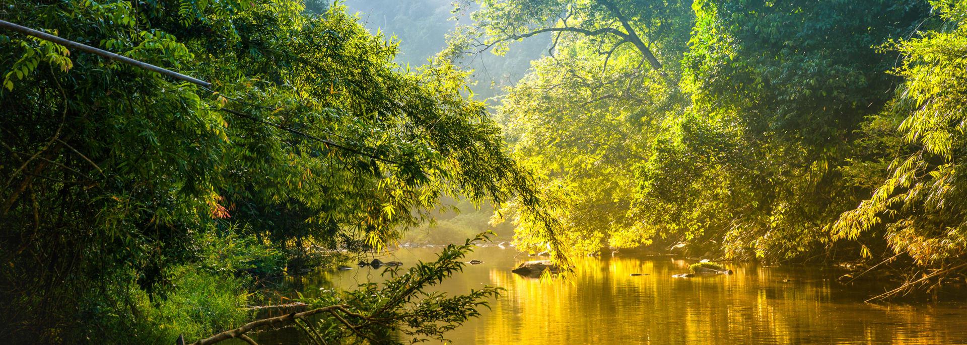 Beeindruckende Panoramasicht auf den tropischen Wald, Costa Rica