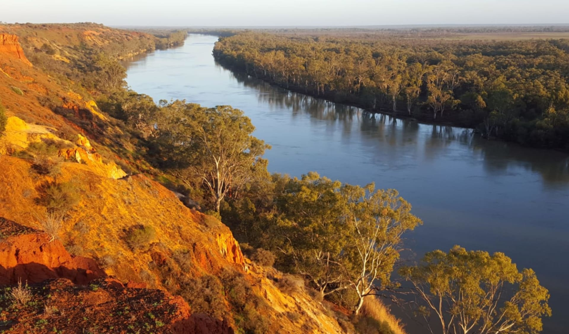 Murray River Walk ab Renmark: Murray River - Riverview
