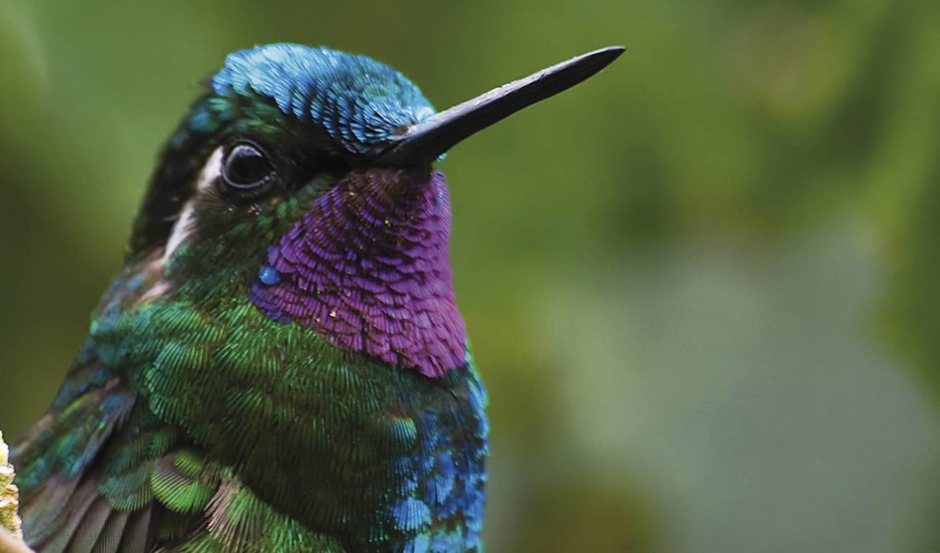Privatreise Costa Rica Pazifiktour ab San José City: Costa Rica - Pazifik - Vogel
