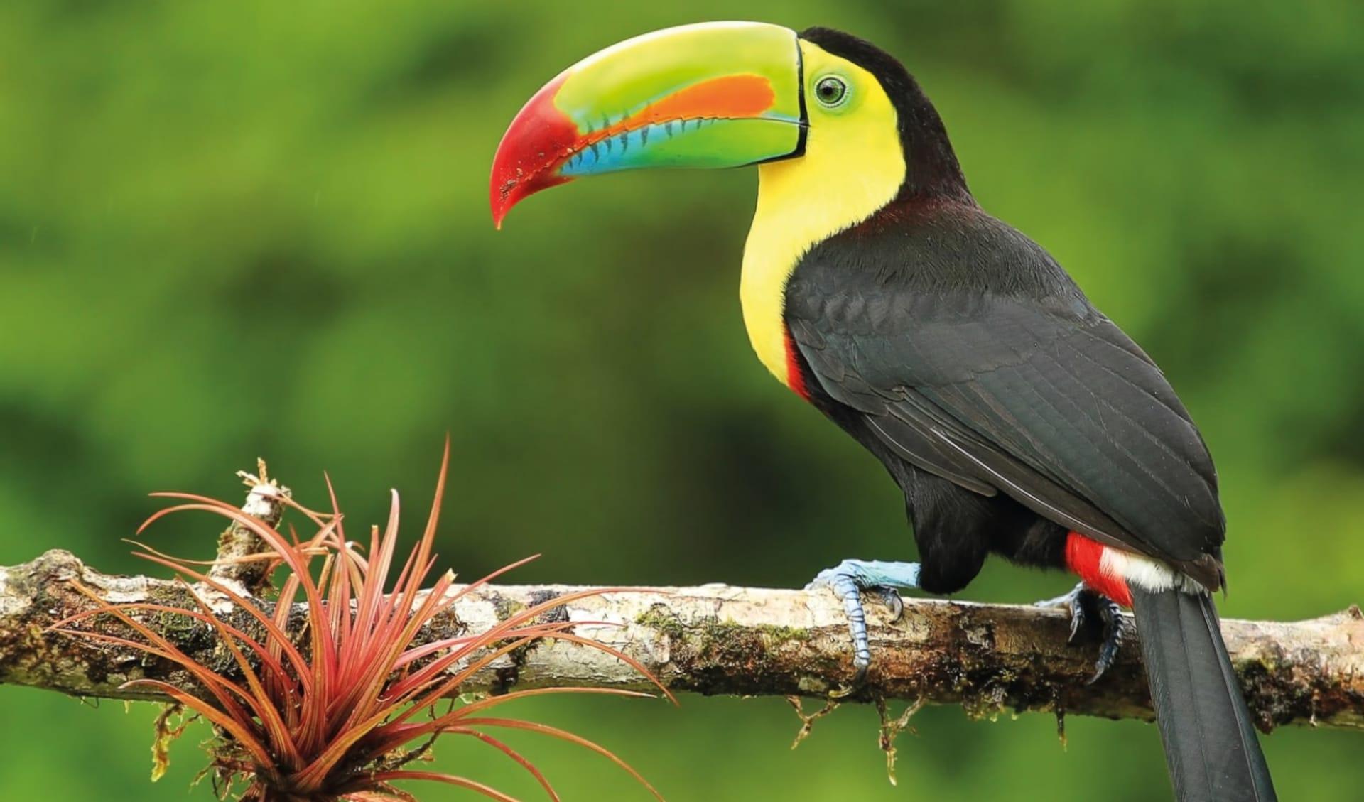 Gruppenreise Mundo Verde ab San José City: Costa Rica - Tukan