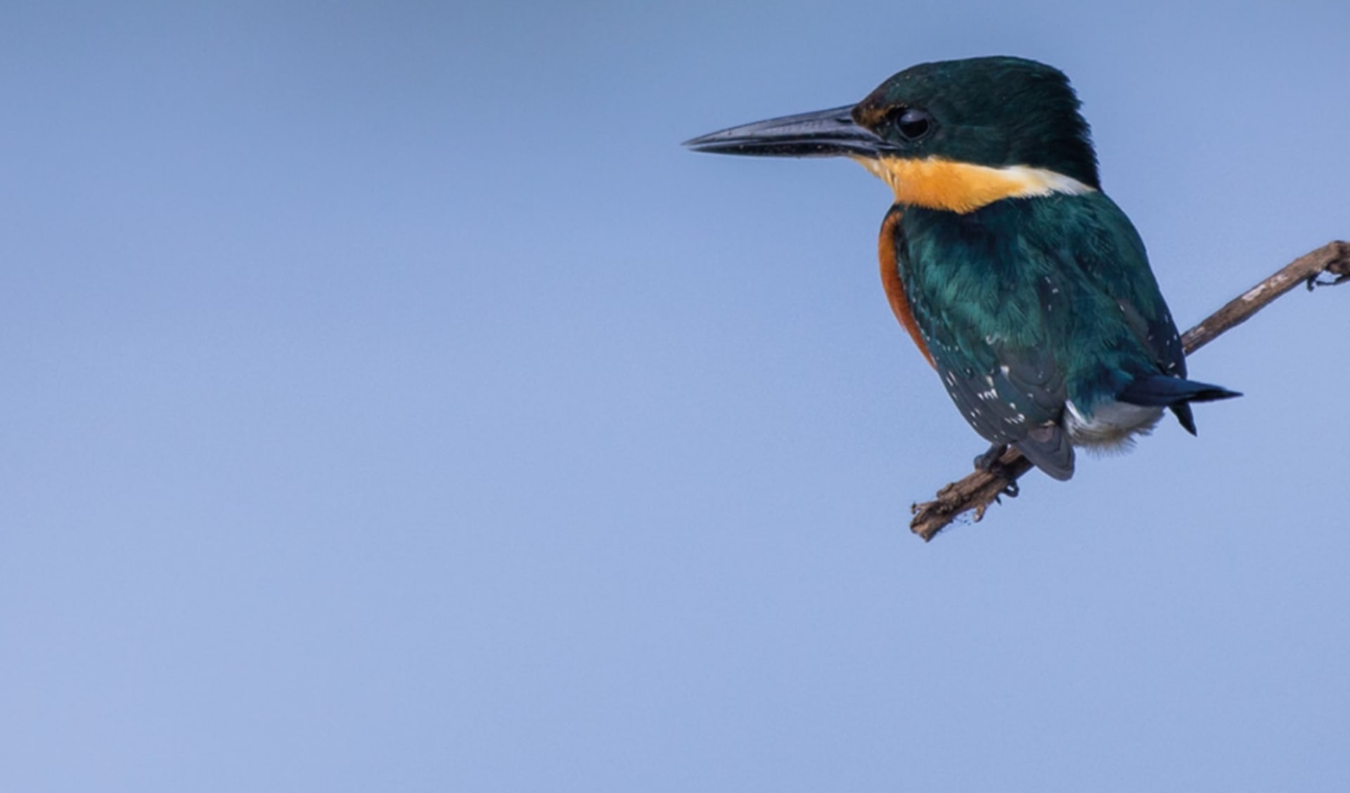 Privatreise Karibik mal anders ab San José City: Costa Rica - Amerikanischer pygmy kingfisher