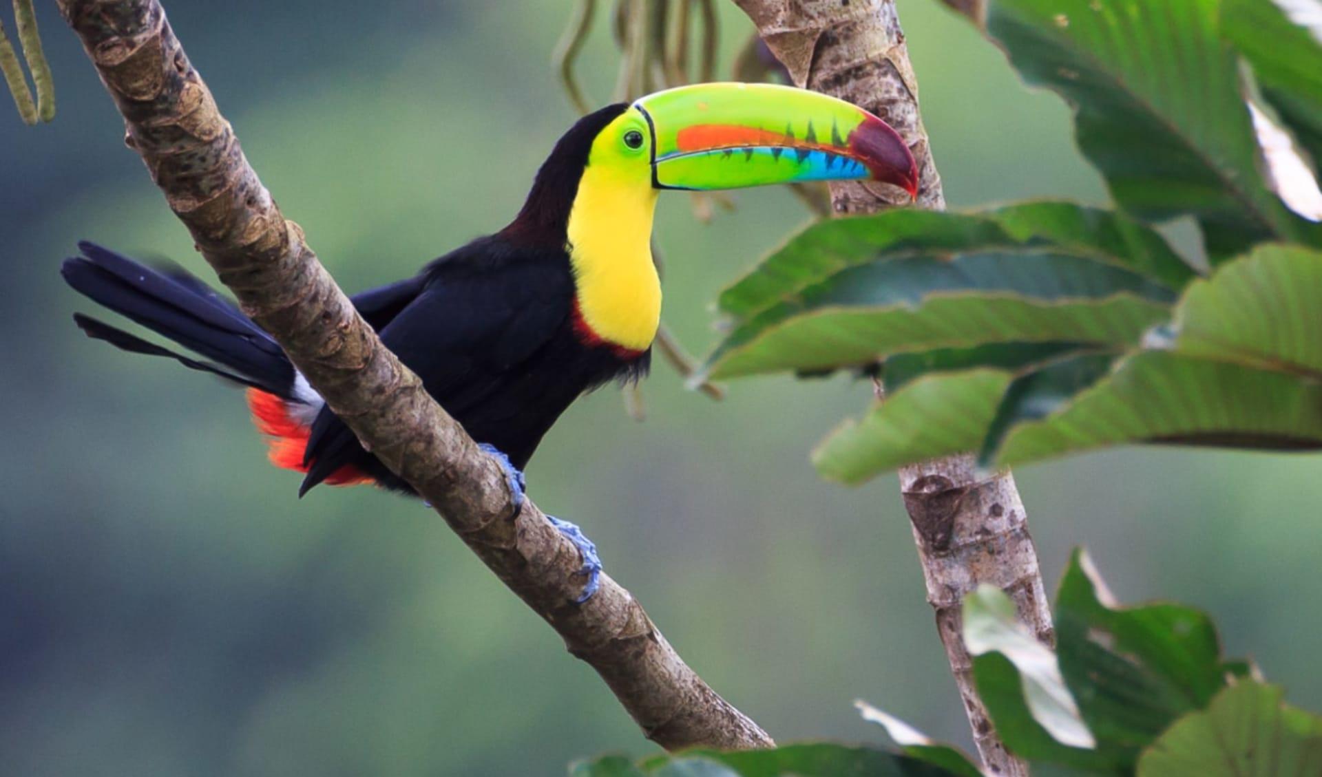Privatreise Costa Rica Mosaik ab San José City: Costa Rica - Tukan