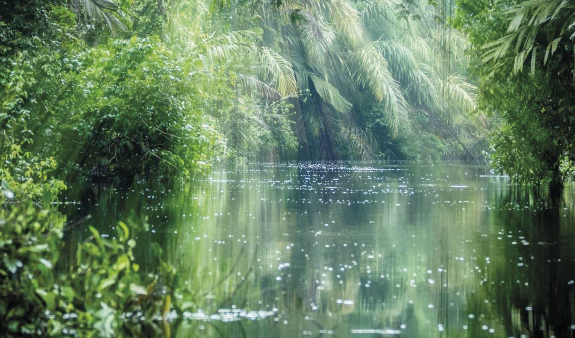 Privatreise Dschungel Deluxe ab San José City: Costa Rica - Tortuguero Nationalpark - Regenwald