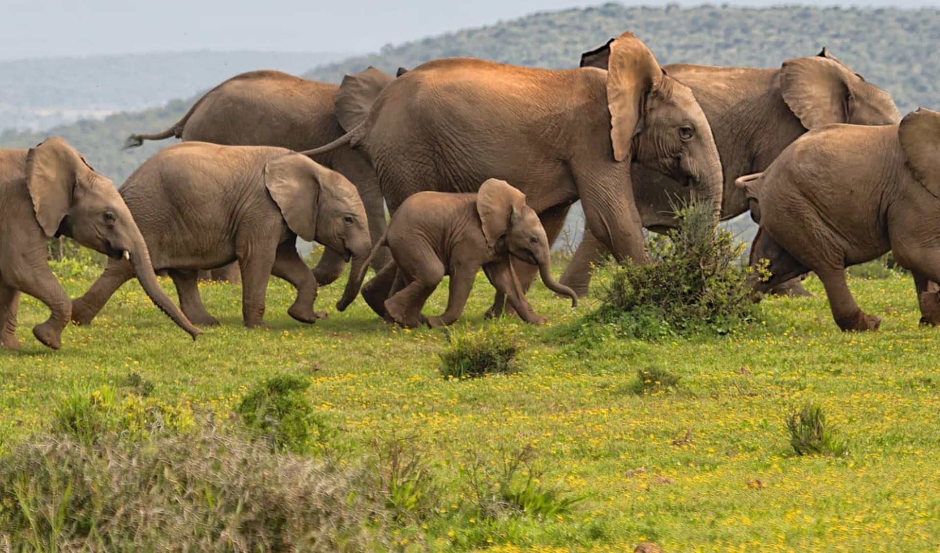 Südafrikanische Impressionen ab Johannesburg: tier Eco Friendly durch Namibia - Elefanten c