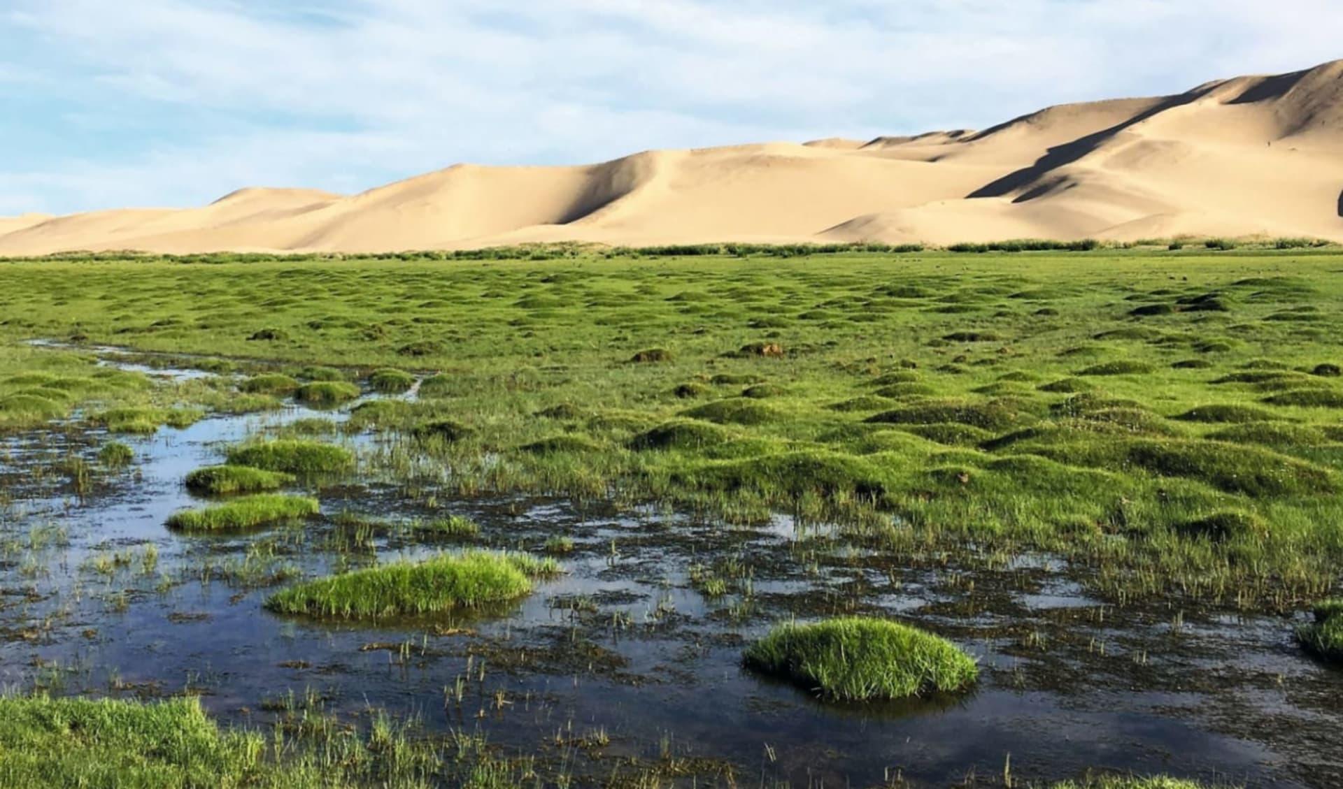 Grasland, Steppenwind und Wüstensand ab Ulaanbaatar: Mongolei_Seruun Bulag1_Sonja