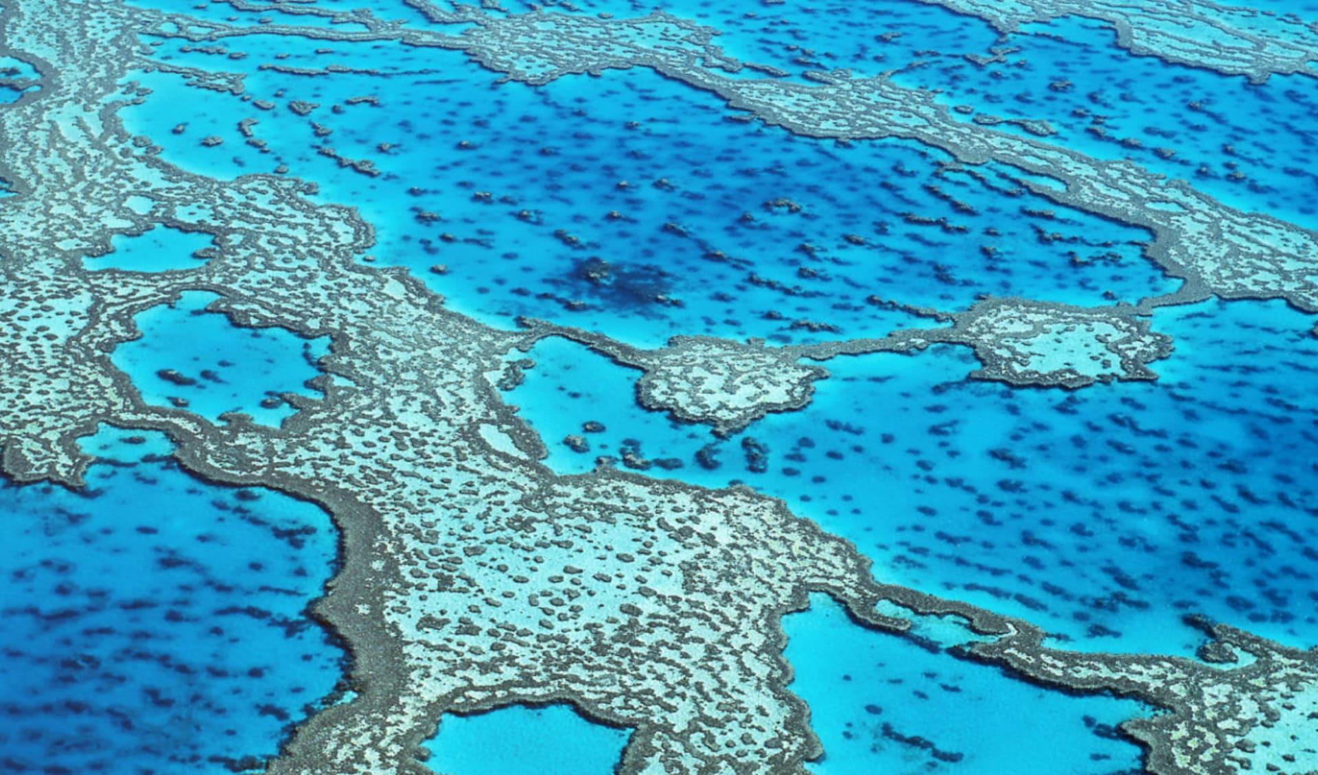 Reefsleep ab Airlie Beach: Great Barrier Reef - Reefsleep