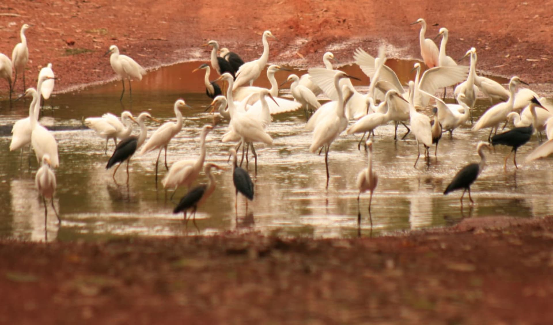 Kakadu, Arnhem Land & Cobourg Peninsula ab Darwin: Cobourg Peninsula - Creek Crossing