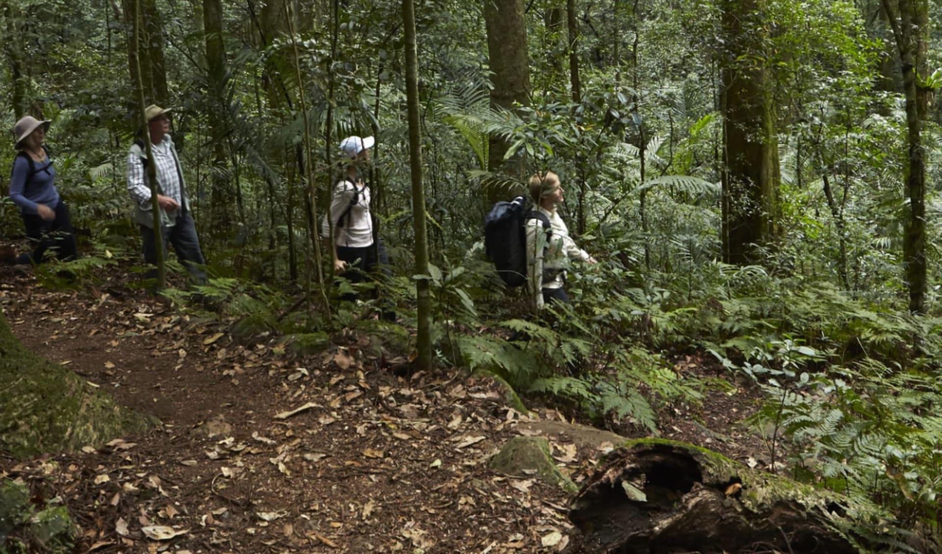Scenic Rim Trail ab Brisbane: Australia - Queensland - Scenic Rim Trail - Urwald