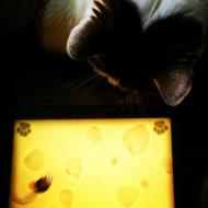 Cat enjoying a good iPad game