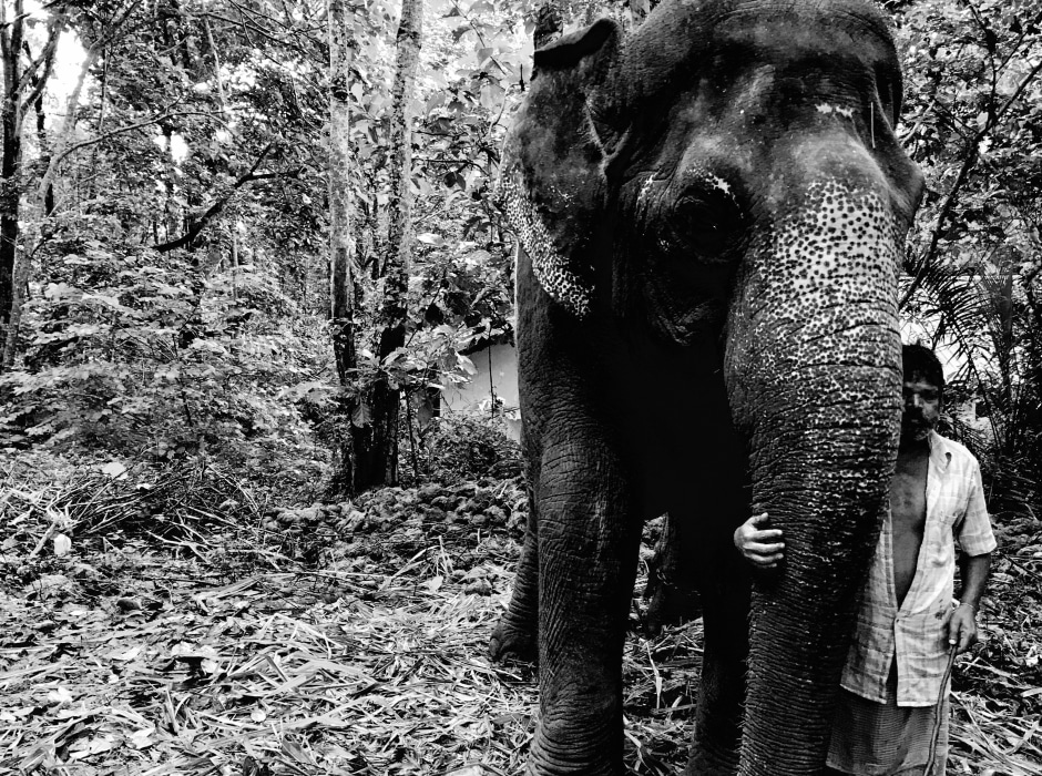 Orphaned elephant with friend