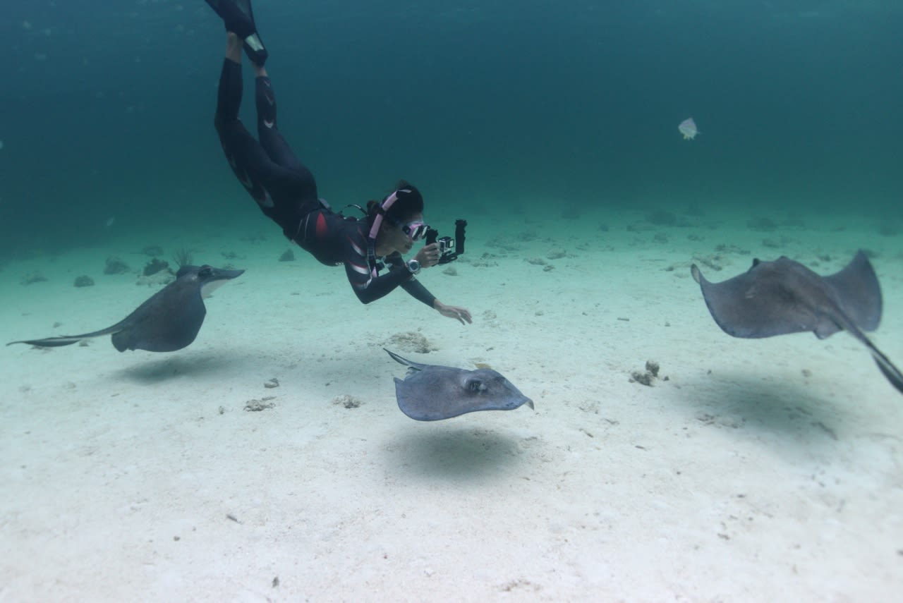 Diving with and filming sting rays