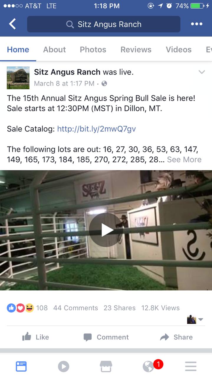 Sitz Angus Bull Sale 2017