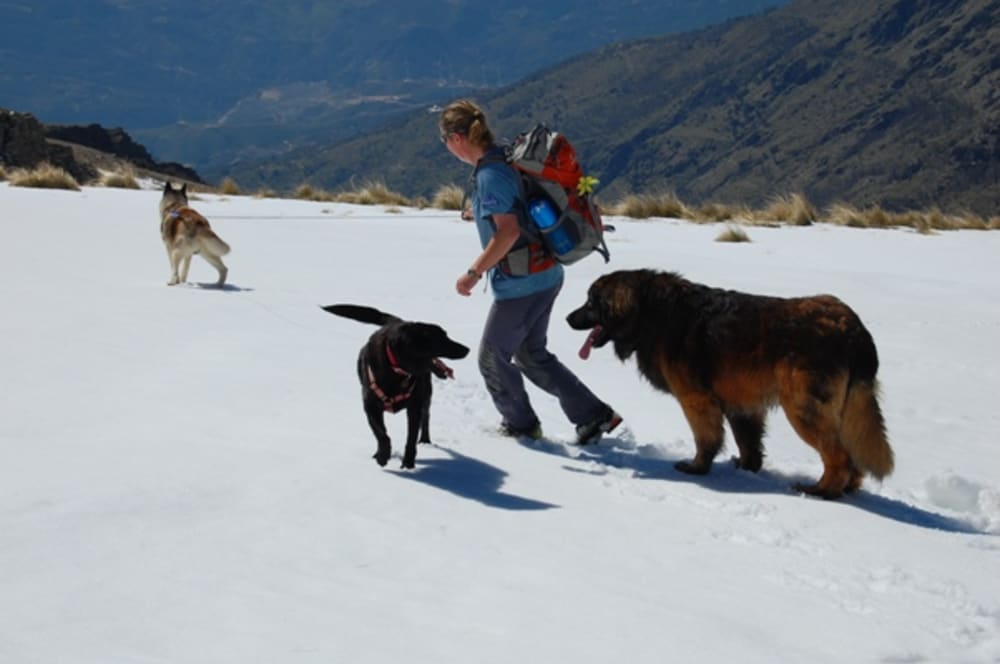 Khumbu, Rocky and Bruno playing in the snow