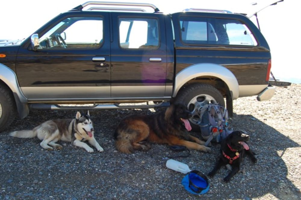 Tired dogs resting in the shade of the car