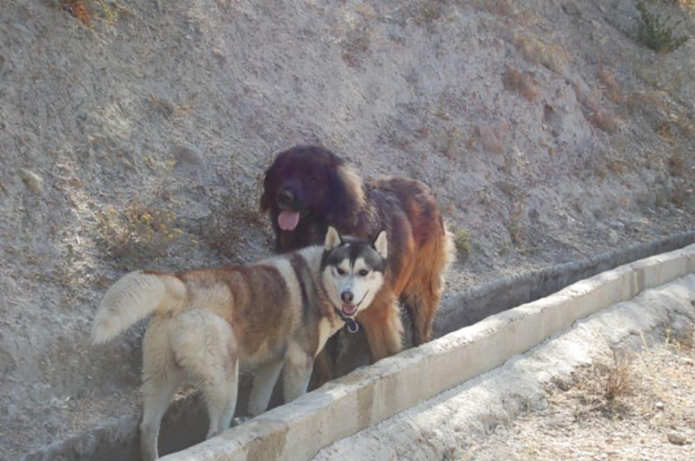 Khumbu & Bruno