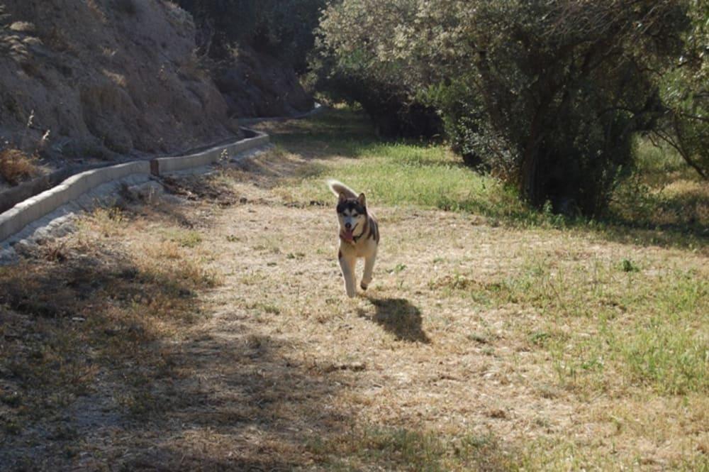 Khumbu running free off the lead