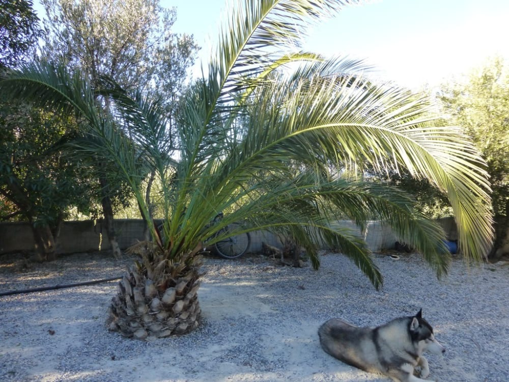 Problem Palm