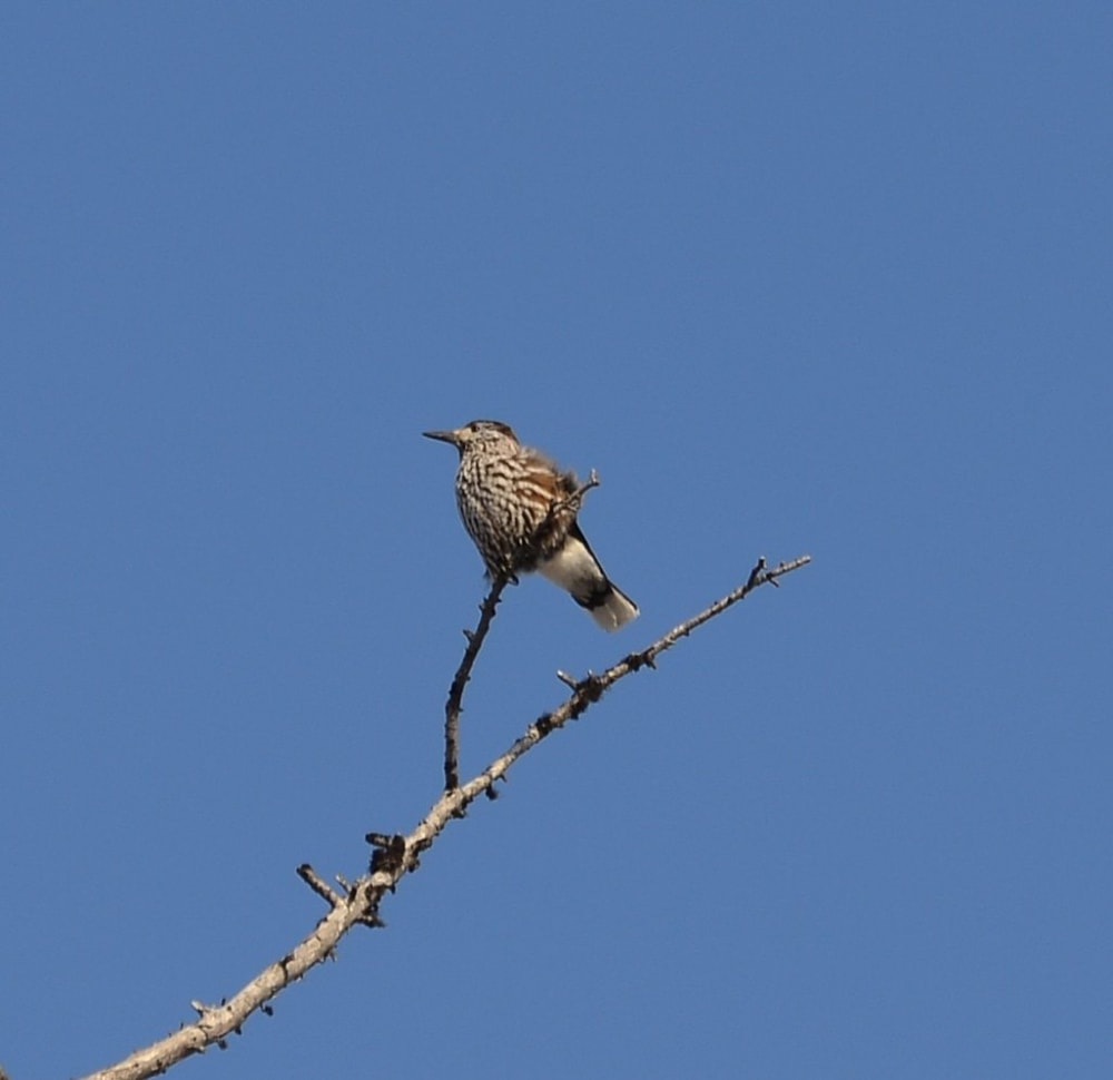 Nothing to do with this part of the blog, but if anyone knows the bird please let me know what it is