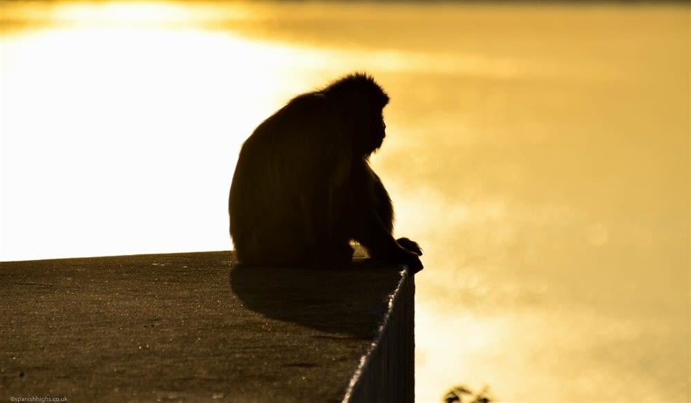 I love the monkeys in Gibraltar.