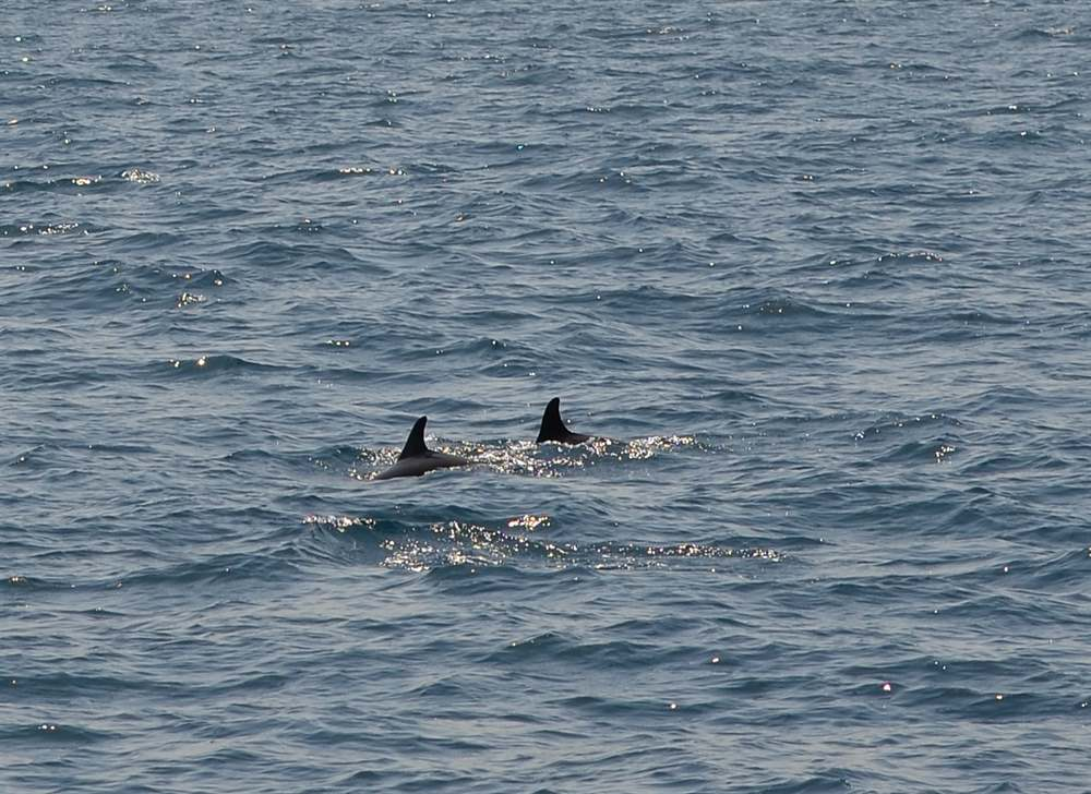 Went dolphin watching after the wedding