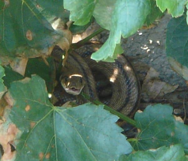 Snakes in the garden!