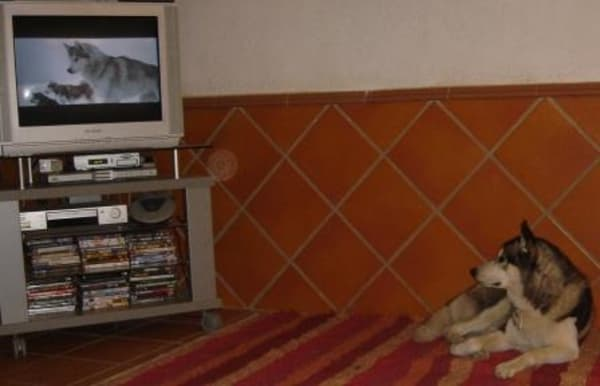 Khumbus Favourite Film