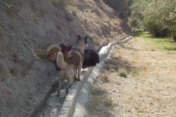 Khumbu, Bruno & the acequia