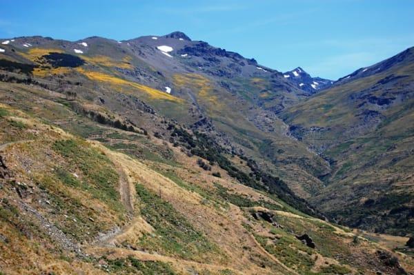 Cerro de Caballo Valleys in full bloom