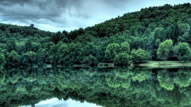 Riset Dampak Deforestasi pada Kesehatan Perlu Dilakukan