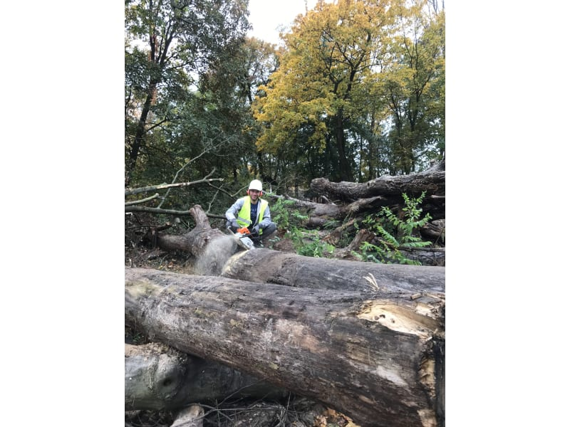 Wycinka drzew - Wycinanie drzew - KrzyweDrzewa.pl