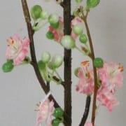 Epleblomst rosa