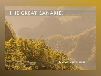 The Great Canaries - Hardcover av Niclas Gustafsson
